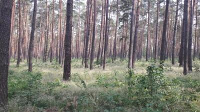 Der Wald als CO2-Speicher